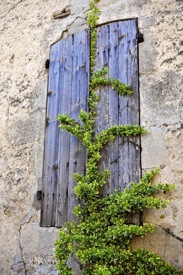 Växt på en slutare arkivbilder
