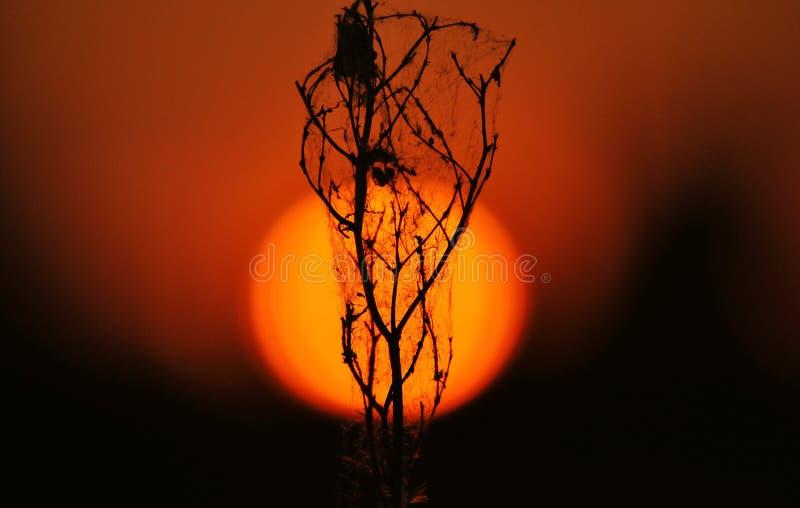 Växt på solnedgången till och med en stor orange sol royaltyfri bild