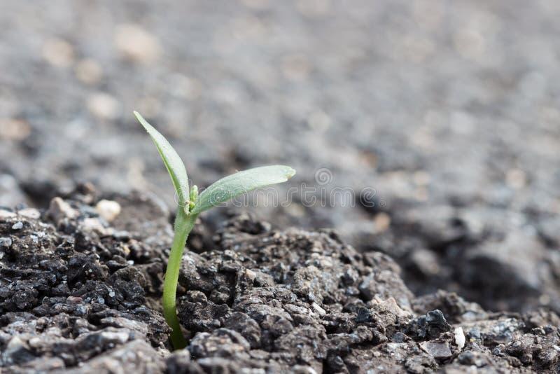 Växt på sprickaasfaltvägen royaltyfri foto