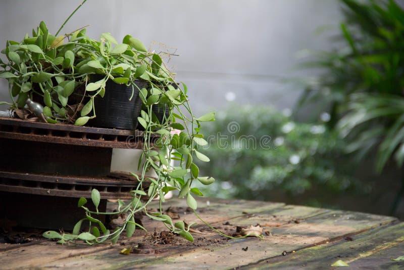 Växt på tabellen arkivbilder