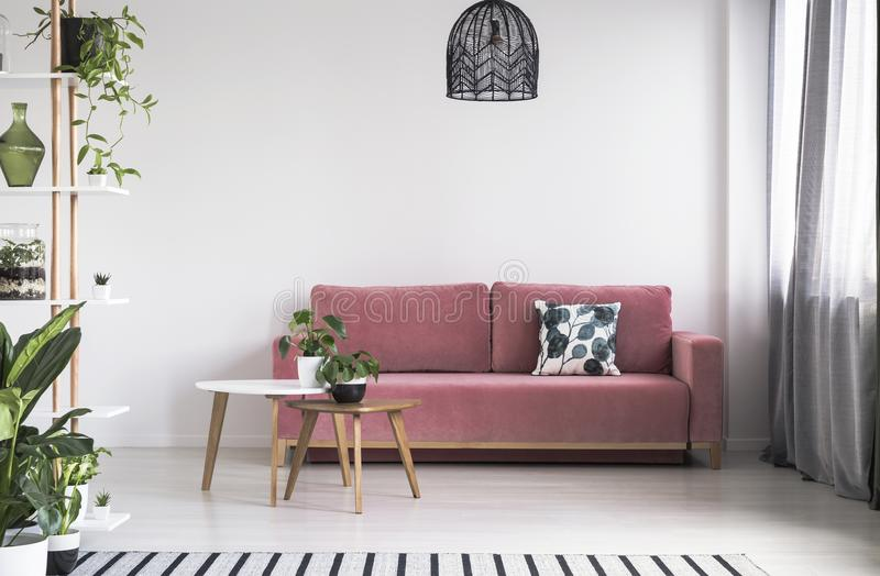 Växt på tabellen framme av den röda soffan i ljus vardagsruminre med lampan Verkligt foto royaltyfri bild