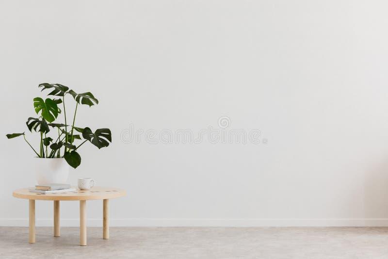 Växt på trätabellen mot den vita tomma väggen med kopieringsutrymme i vardagsruminre Verkligt foto Ställe för ditt möblemang royaltyfria bilder