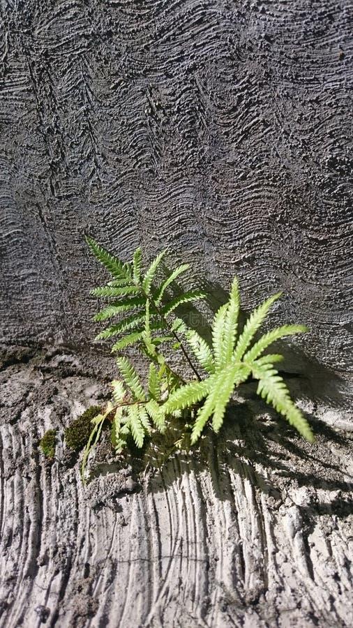Växt på vagga arkivfoton