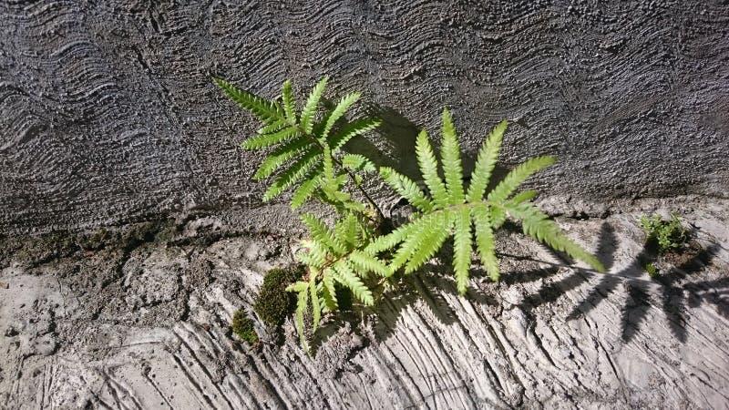 Växt på vagga royaltyfri fotografi