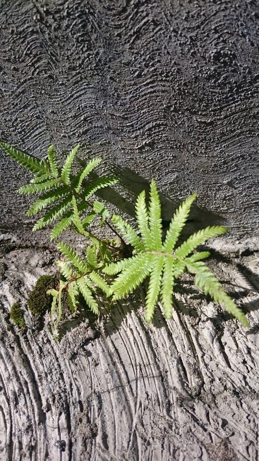 Växt på vagga royaltyfria foton