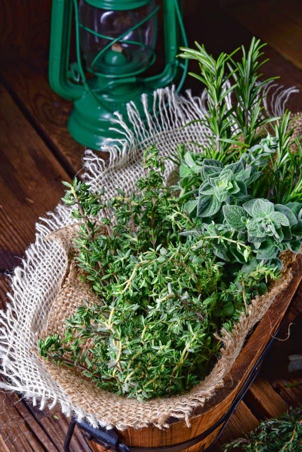 Växt- samling av: timjan oregano, rosmarin arkivbilder