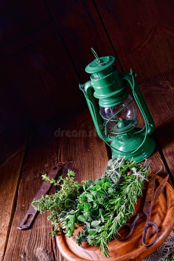 Växt- samling av: timjan oregano, rosmarin royaltyfri fotografi