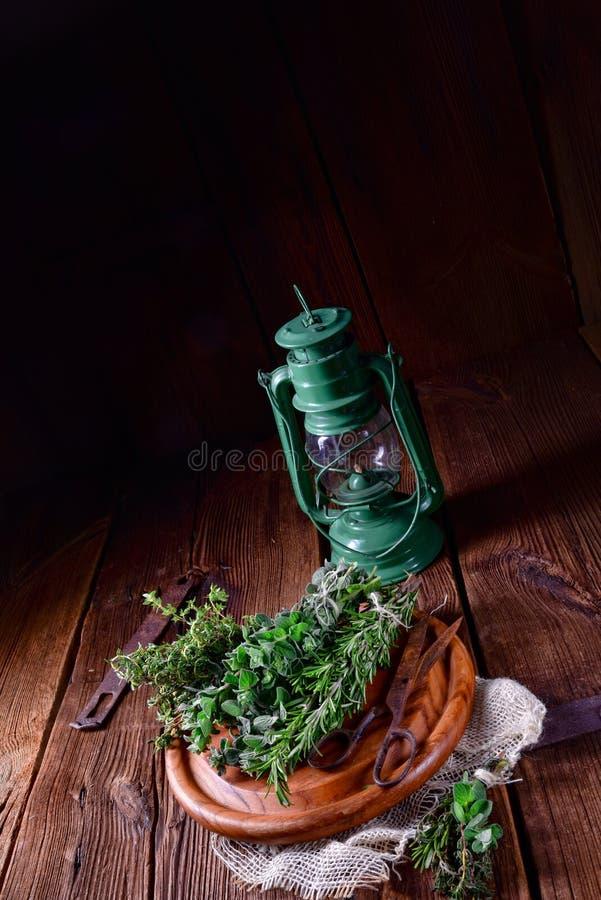 Växt- samling av: timjan oregano, rosmarin royaltyfria bilder