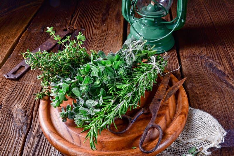 Växt- samling av: timjan oregano, rosmarin fotografering för bildbyråer