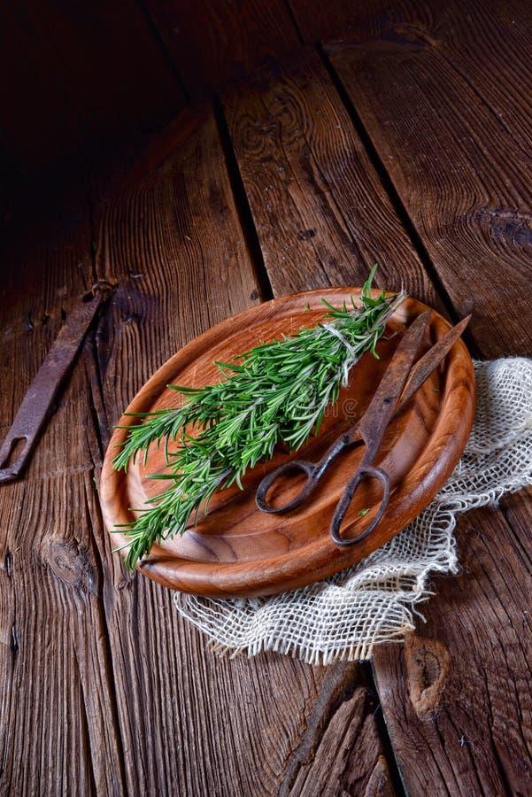 Växt- samling av: timjan oregano, rosmarin royaltyfria foton