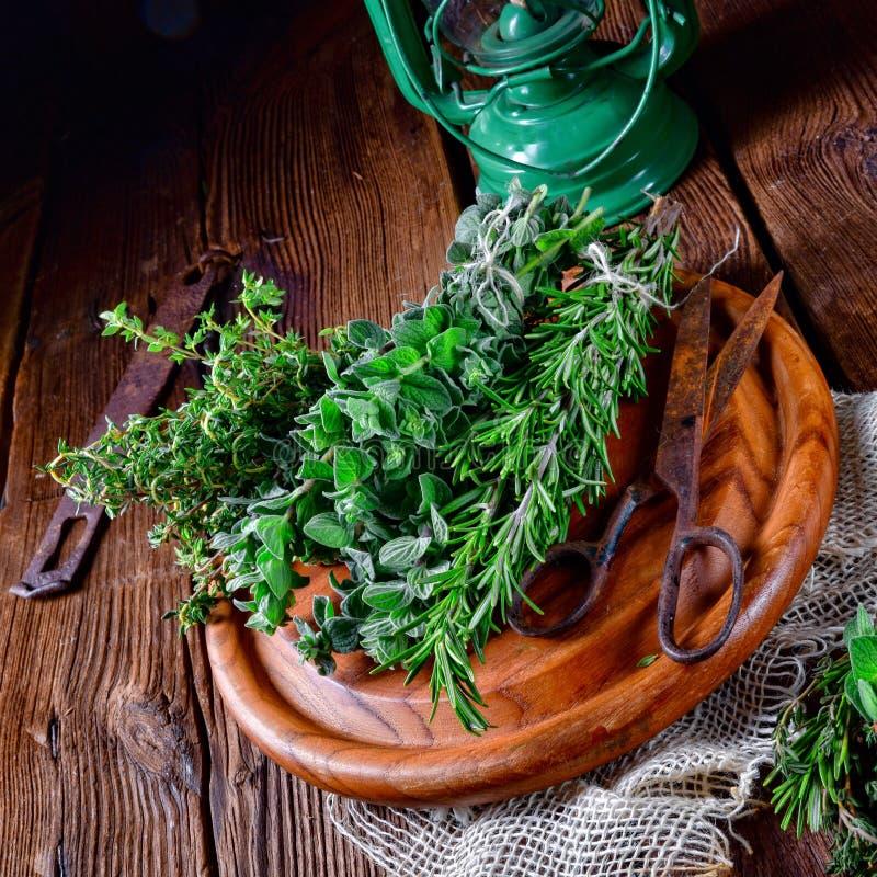 Växt- samling av: timjan oregano, rosmarin royaltyfri bild