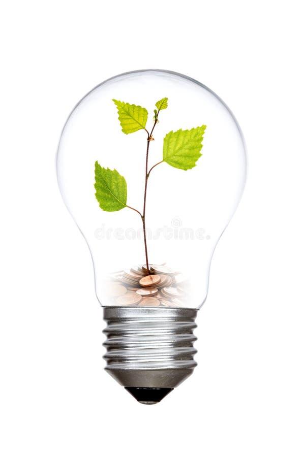 Växt som växer på mynt inom lightbulben arkivbilder