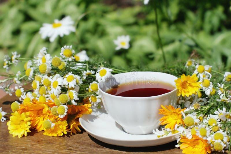 växt- tea fotografering för bildbyråer