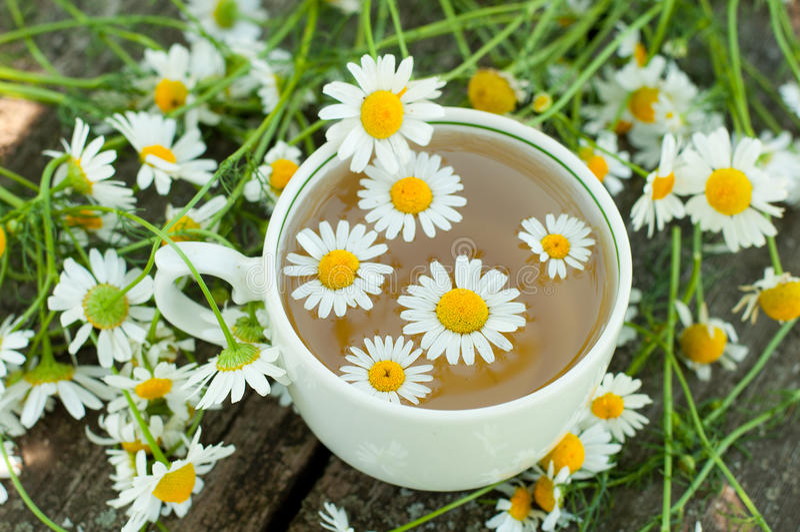 Växt- tea av en chamomile blommar arkivbilder