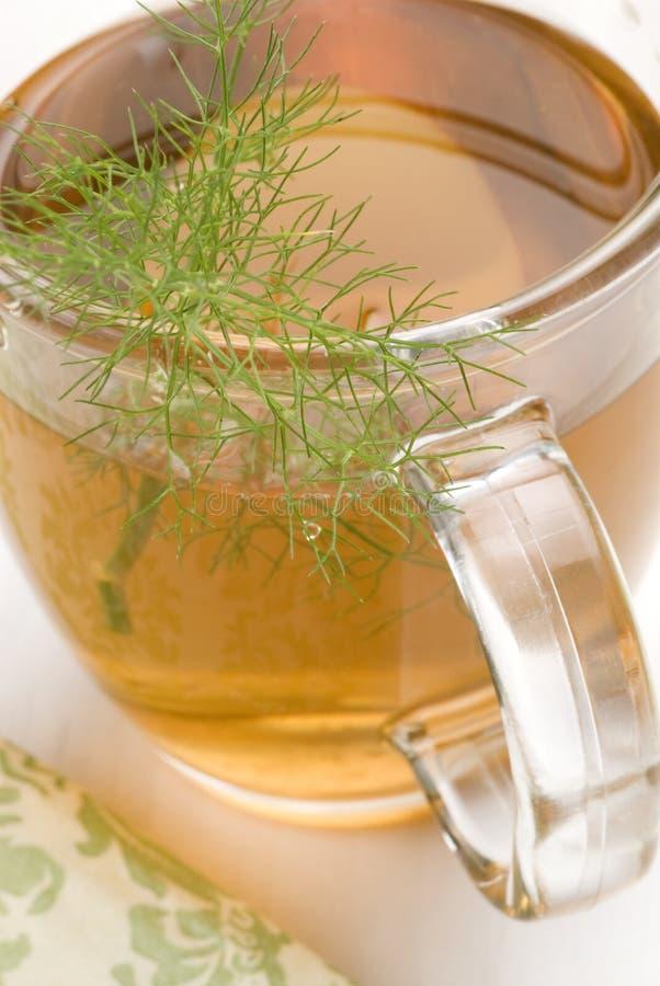 växt- tea för fennel royaltyfria bilder