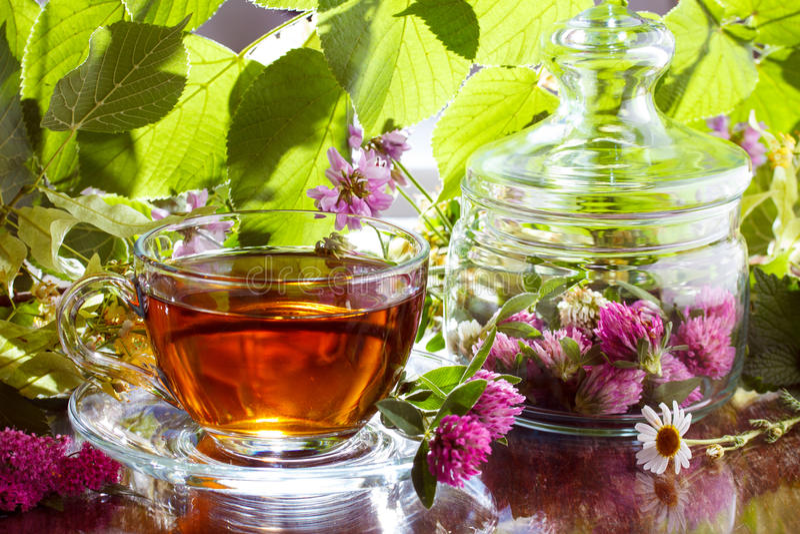 Växt- tea för växt av släkten Trifolium royaltyfri foto