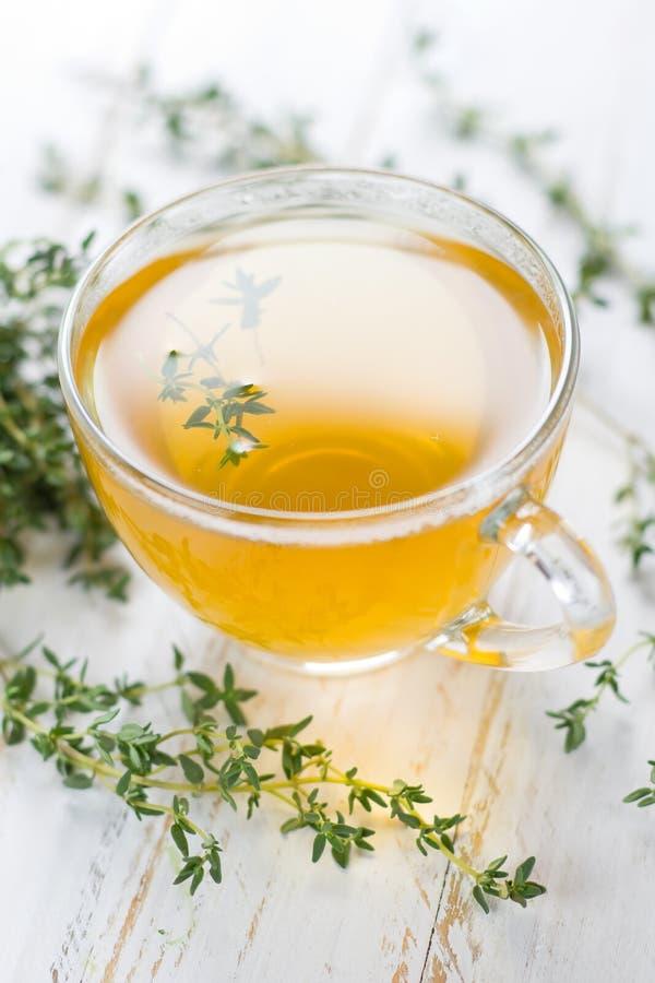 Växt- tea. Timjan arkivbild