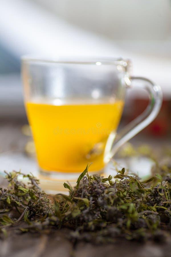 Växt- varmt te med timjan fotografering för bildbyråer
