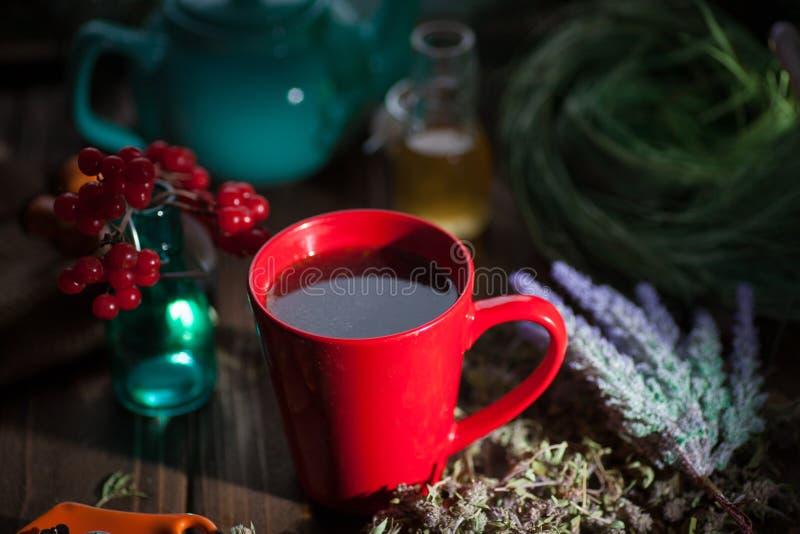 Växt- varmt te med timjan royaltyfri fotografi