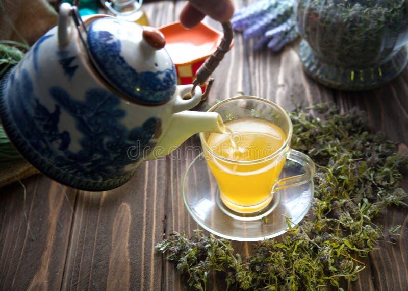 Växt- varmt te med timjan royaltyfri foto