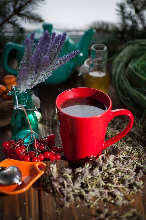 Växt- varmt te med timjan arkivfoton