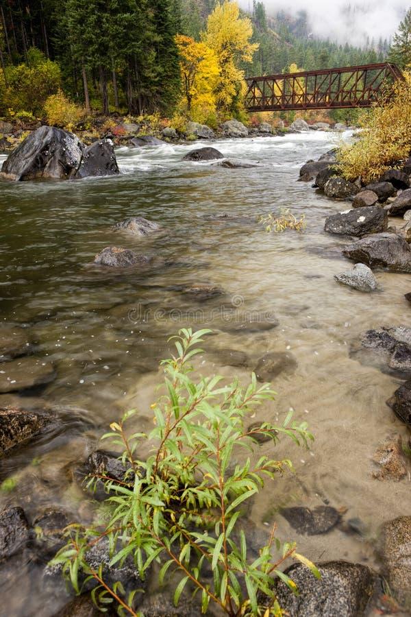 Växt vid floden arkivfoton