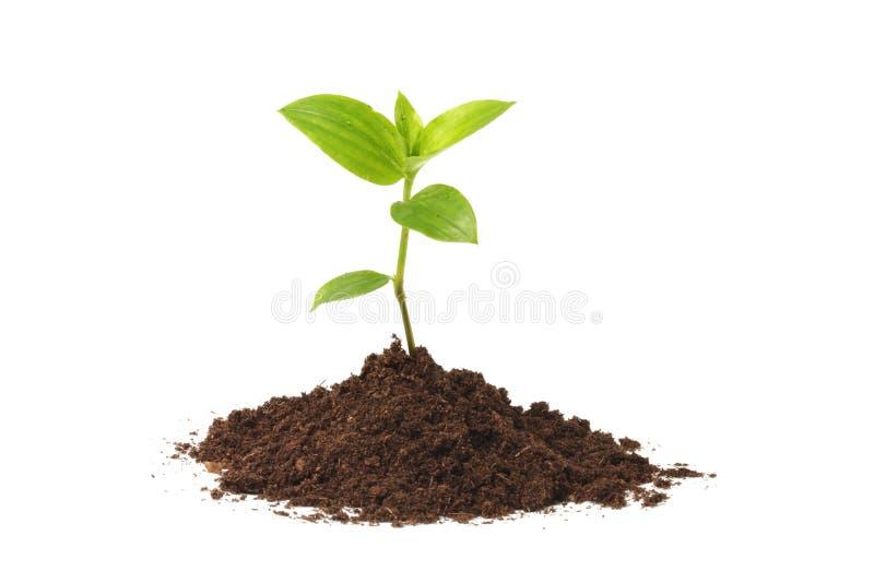 växtbarn arkivfoto