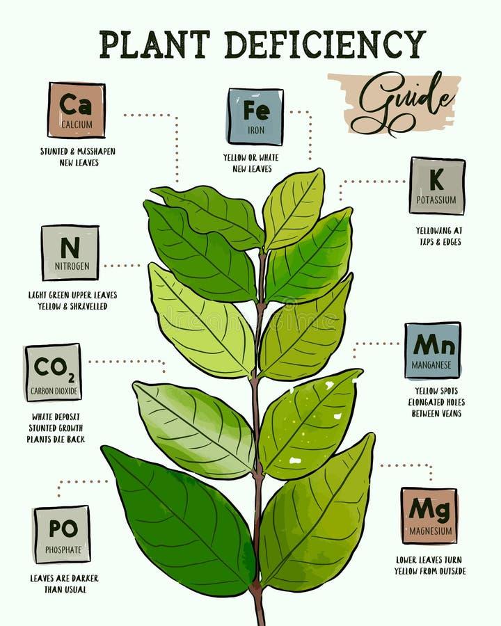Växtbristhandbok - plantera frågor stock illustrationer