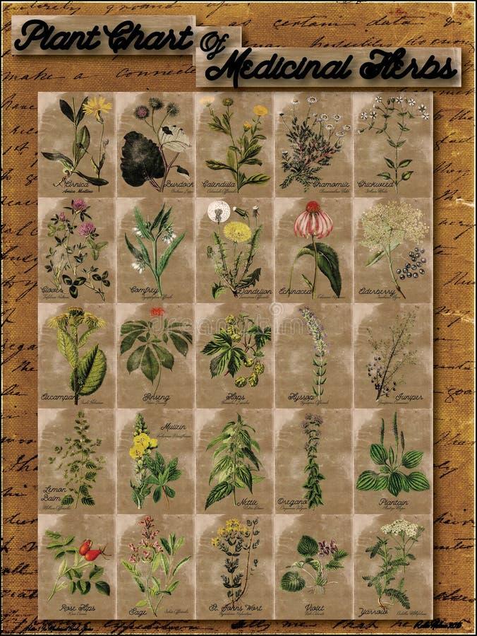 Växtdiagram av medicinska örter 1 arkivbild