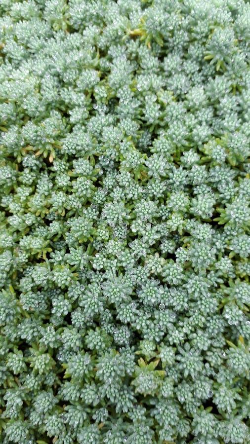 Växten är grön arkivbilder