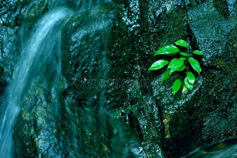 Växten för den lilla vattenfallet för liten vik vaggar den gröna bakgrund royaltyfri foto