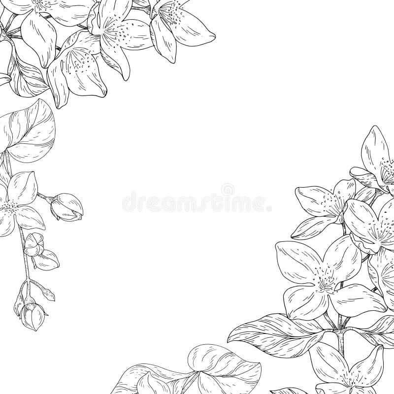 Växten i blomningen, filial med blommafärgpulver skissar på vit bakgrund stock illustrationer