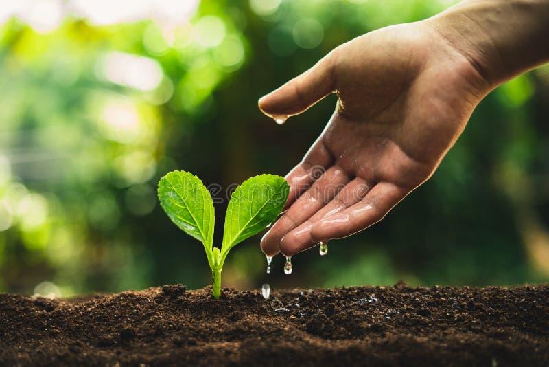 Växten kärnar ur att plantera trädtillväxt, fröt spirar på jorder för bra kvalitet i natur fotografering för bildbyråer