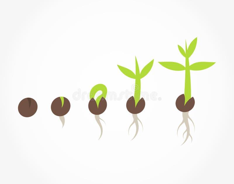Växten kärnar ur groendeetapper royaltyfri illustrationer
