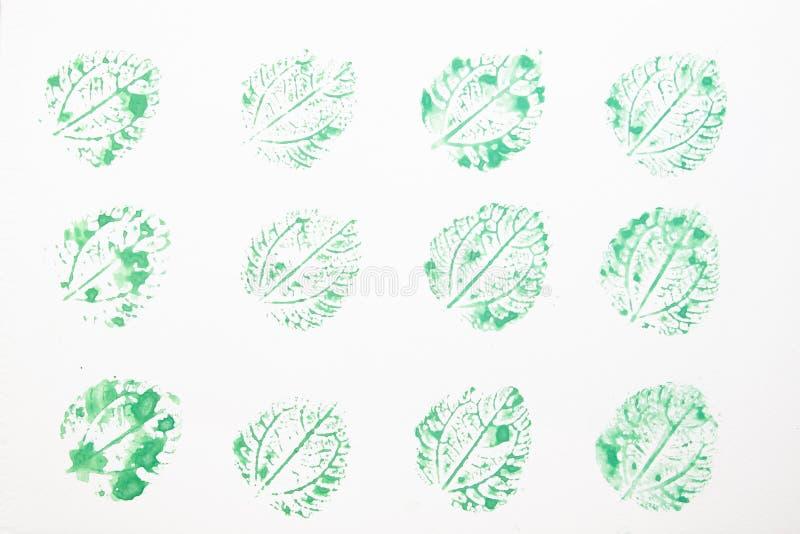 Växten lämnar akvarell utskrivaven på vitbok royaltyfri foto