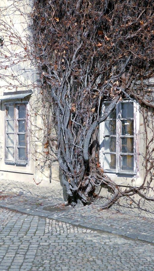 Växten och huset arkivfoton