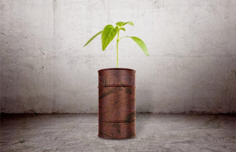 Växten som växer ut ur brun barrell royaltyfria foton