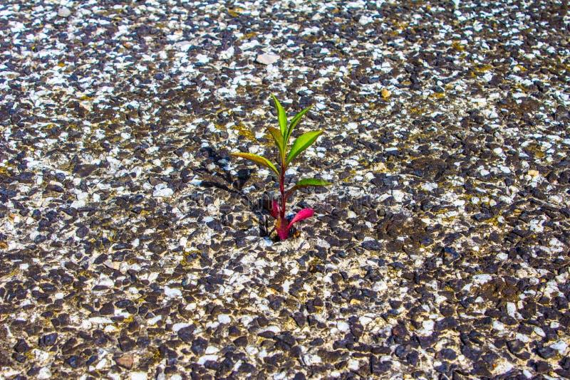 Växten växer ut ur stenen Boningen som bor Bakgrund royaltyfri foto