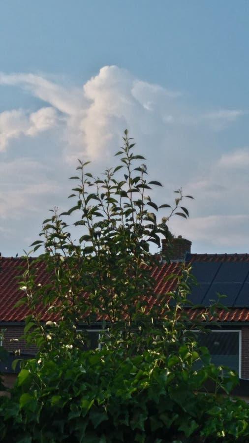 Växten verkar för att växa in i molnet arkivbild