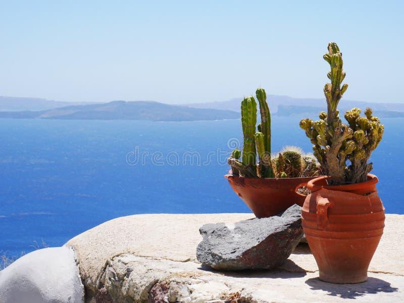 växter arkivfoton