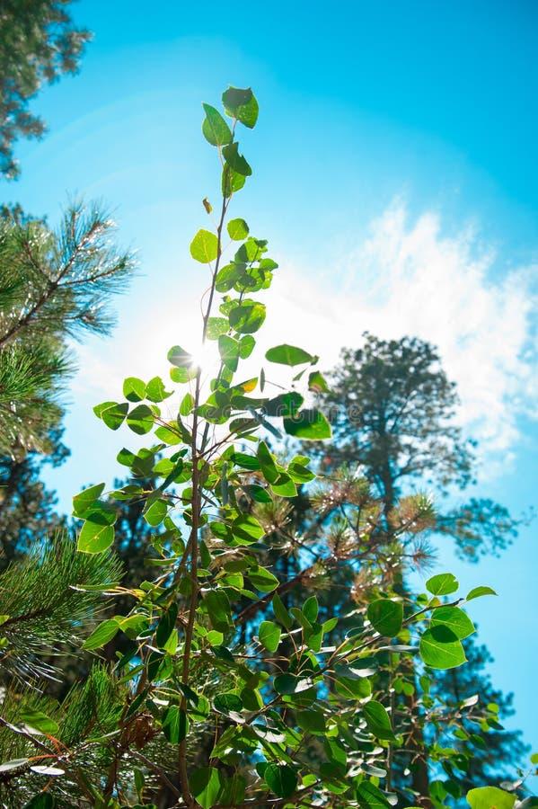 Växter av landssidan i Amerika Amerika är en kontinent var amerikanskt främst levande Världen är stor nog att undersöka royaltyfria bilder
