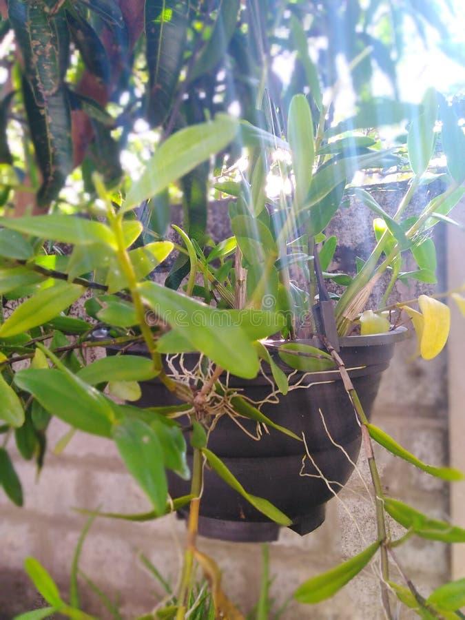 Växter behöver soligt huruvida royaltyfri fotografi