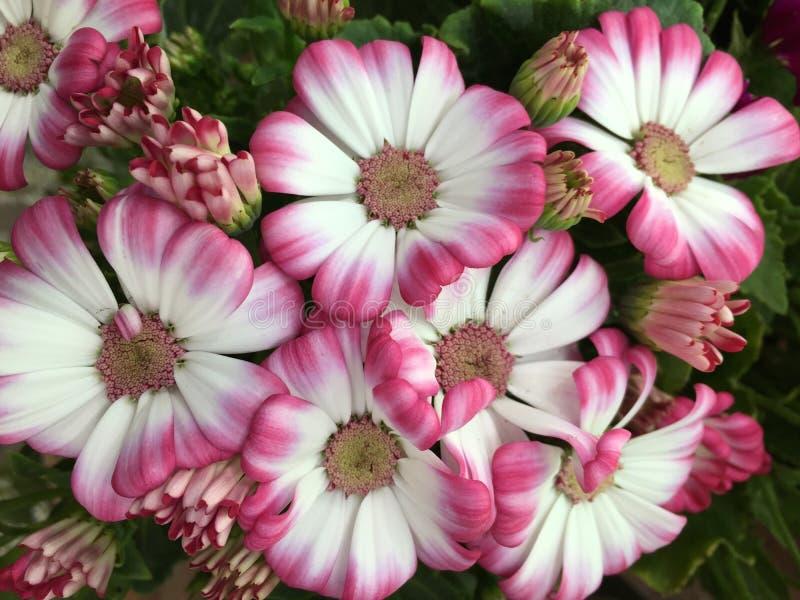 Växter ~ blomma royaltyfria foton