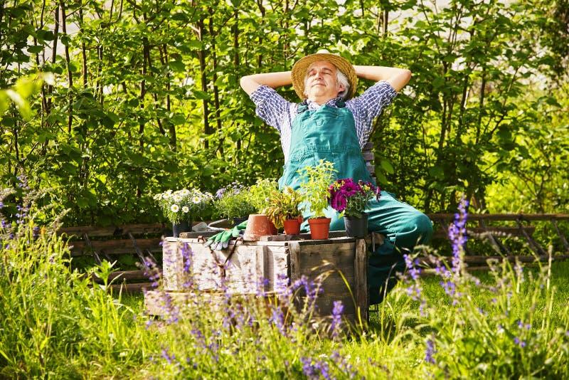 Växter för den trädgårdsmästareStraw hatten arbeta i trädgården att koppla av royaltyfria foton
