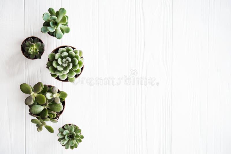 Växter för grönt hus lade in, ren vit träbackg för succulentson royaltyfri bild