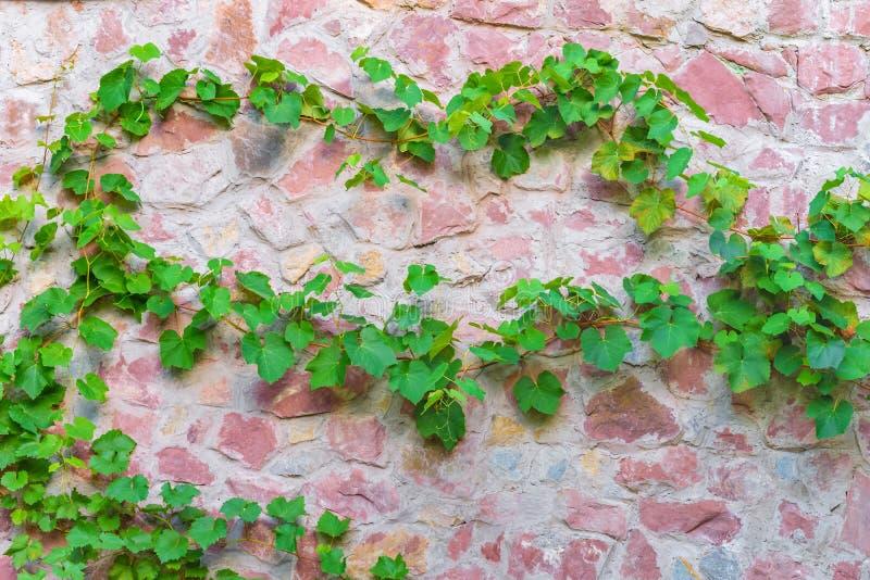 Växter för vägg för bakgrundstextursten arkivfoton
