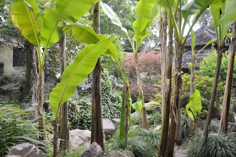 Växter från den berömda Yu trädgården på centrum av Shanghai royaltyfri fotografi
