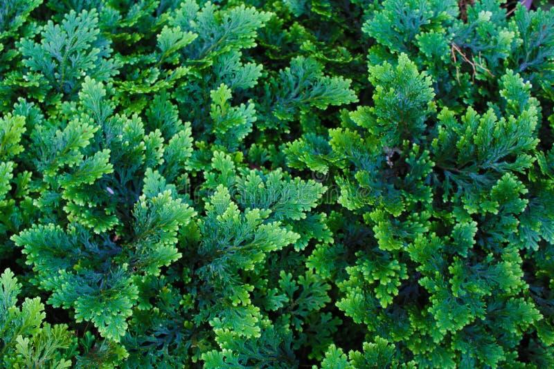 Växter gör grön mycket färg fotografering för bildbyråer