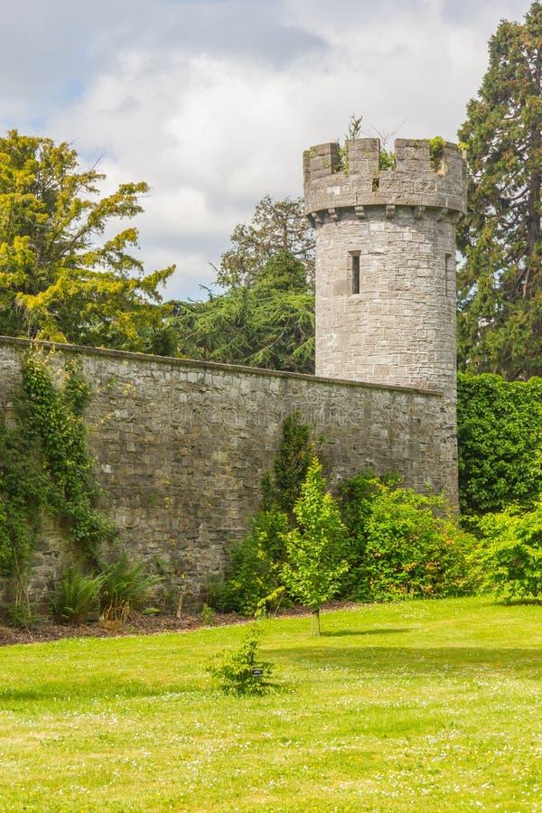 Växter, gräs och torn i botanisk trädgård fotografering för bildbyråer
