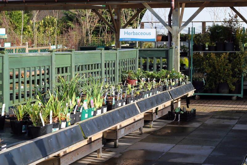 Växter i en trädgård centrerar. royaltyfri bild